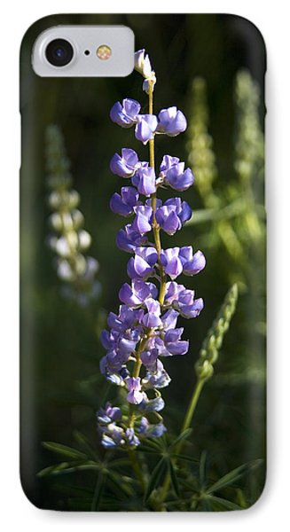 Lupine Echoes IPhone Case by Morris  McClung
