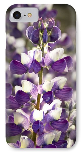 IPhone Case featuring the photograph Lupine Wildflowers by Sonya Lang