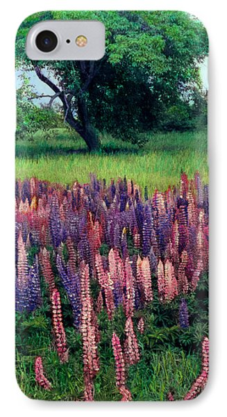 Lupines Midcoast Maine IPhone Case by Cindy McIntyre