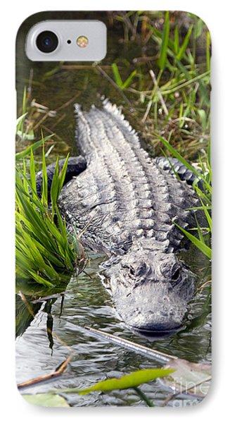 Lurking Alligator IPhone Case