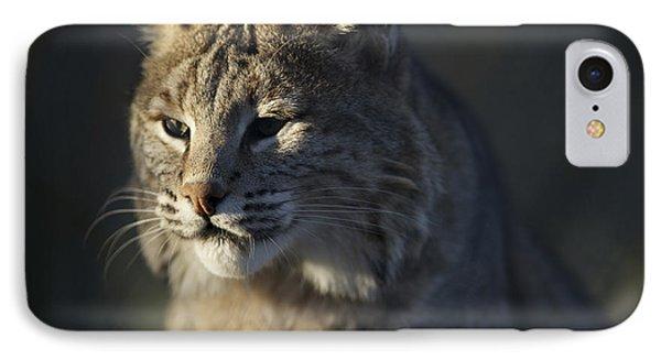 Lynx Portrait #6 IPhone Case by Matt Plyler