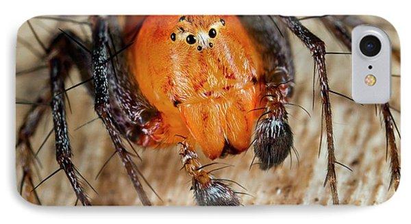 Lynx Spider IPhone Case by Nicolas Reusens