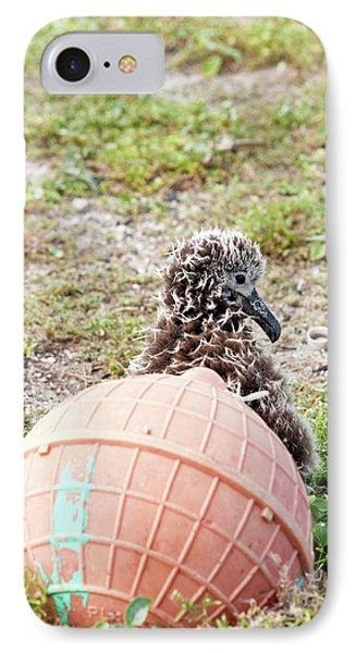 Lysan Albatross (phoebastria Immutabilis IPhone Case by Daisy Gilardini