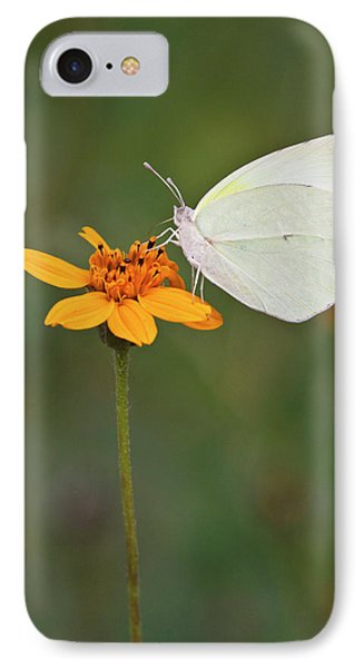 Lyside Sulphur (kricogonia Lyside IPhone Case by Larry Ditto