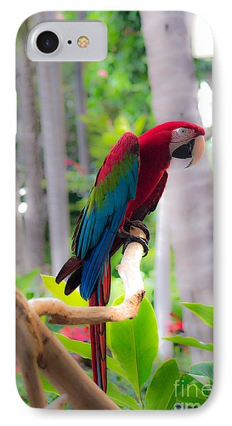 IPhone Case featuring the photograph Macaw by Angela DeFrias