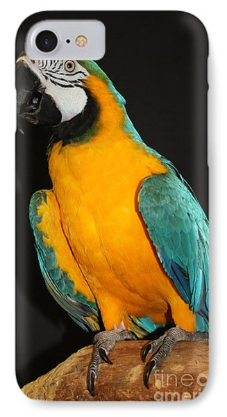 Macaw Hanging Out IPhone Case by John Telfer
