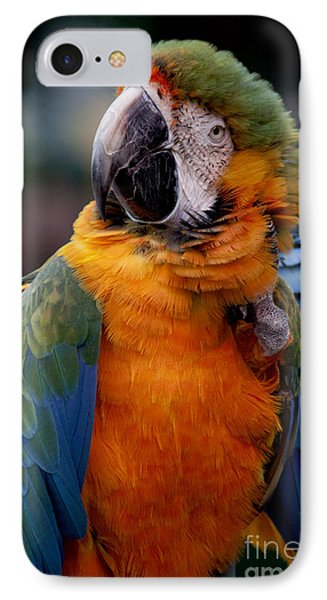 Macaw IPhone Case by Ivete Basso Photography