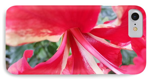 Macro Beauty IPhone Case by Fortunate Findings Shirley Dickerson