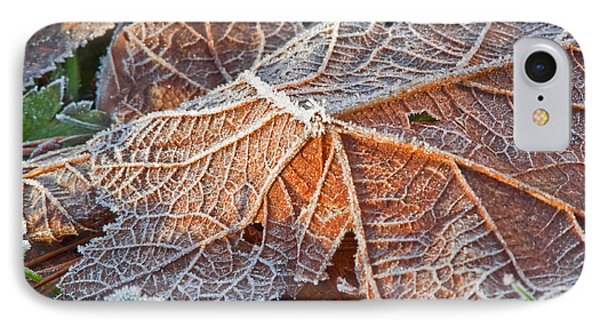 Macro Nature Image Of Fallen Leaf With Frost IPhone Case by Valerie Garner