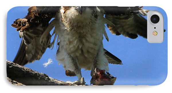 Mad Osprey IPhone Case by Roger Becker
