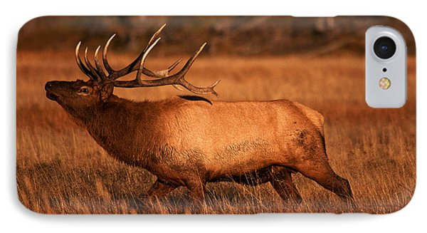 Madison Bull IPhone Case by Mark Kiver
