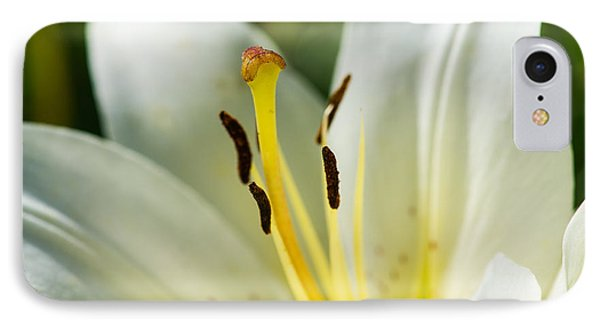 Madonna Lily - Featured 3 Phone Case by Alexander Senin