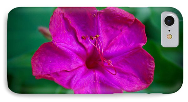 IPhone Case featuring the photograph Magenta Morning Glory by Jean Haynes