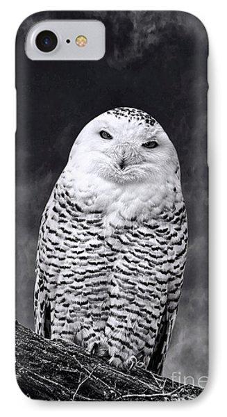 Magic Beauty - Snowy Owl IPhone Case by Adam Olsen