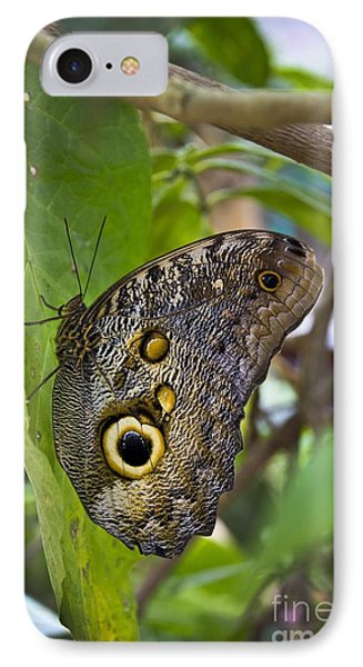Magnificent Huge Butterfly In Mindo Ecuador IPhone Case