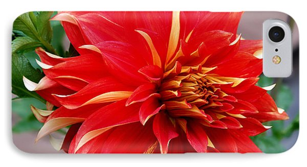 IPhone Case featuring the photograph Magnifique by Jeanette C Landstrom