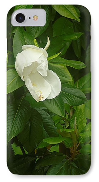 IPhone Case featuring the photograph Magnolia 1 by Suzanne Powers