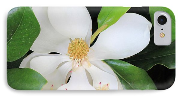 Magnolia Beauty IPhone Case