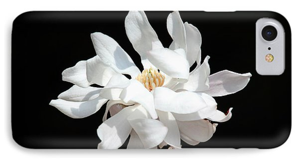 Magnolia Blossom IPhone Case by Trina  Ansel
