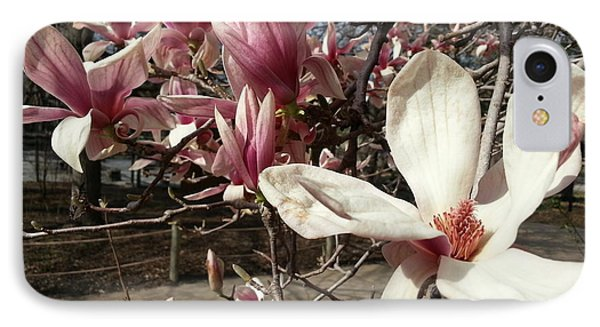 IPhone Case featuring the photograph Magnolia Branches by Caryl J Bohn