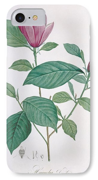 Magnolia Discolor Engraved By Legrand IPhone Case by Henri Joseph Redoute