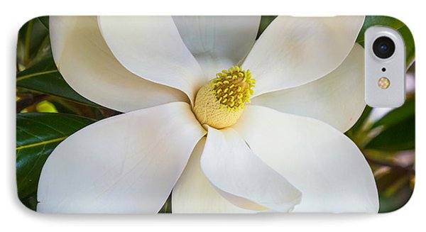 Magnolia Flower IPhone Case by Inge Johnsson