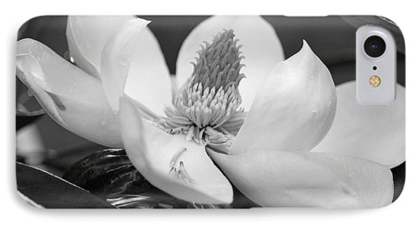 Magnolia In May - Black And White IPhone Case by Suzanne Gaff