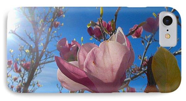 Magnolia Tree 1 IPhone Case by John Norman Stewart