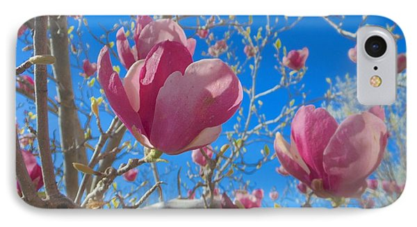 Magnolia Tree Blossoms 2 IPhone Case by John Norman Stewart