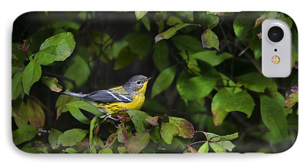 Magnolia Warbler Phone Case by Christina Rollo