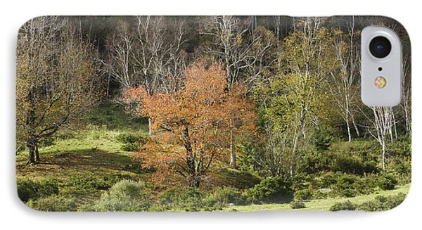 Maine Hillside Landscape In Fall IPhone Case by Keith Webber Jr
