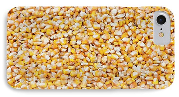 Maize Crop IPhone Case by Ashley Cooper