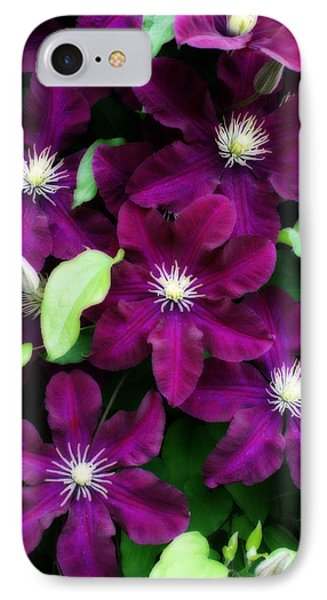 Majestic Amethyst Colored Clematis IPhone Case by Kay Novy