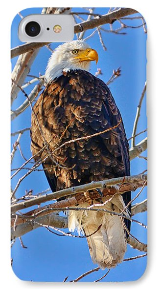 Majestic Bald Eagle IPhone Case by Greg Norrell