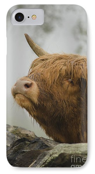 Majestic Highland Cow IPhone Case by Linsey Williams