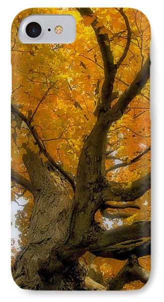 IPhone Case featuring the photograph Majestic Maple by Gary Hall