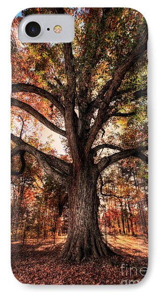 Majestic Oak - Autumn In Greensboro I IPhone Case by Dan Carmichael