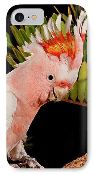 Cockatoo iPhone 7 Case - Major Mitchell's Cockatoo, Lophochroa by David Northcott
