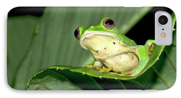 Malabar Gliding Frog IPhone Case by K Jayaram