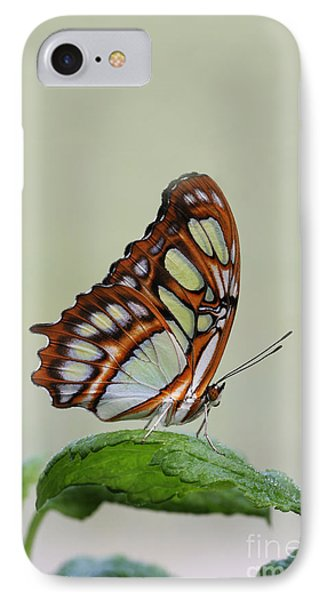 IPhone Case featuring the photograph Malachite Butterfly #5 by Judy Whitton