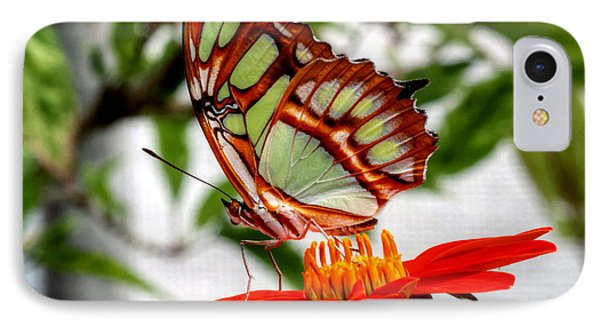 IPhone Case featuring the photograph Malachite Butterfly On A Mexican Coneflower by Larry Trupp