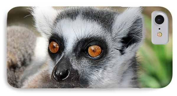 IPhone Case featuring the photograph Malagasy Lemur by Sergey Lukashin