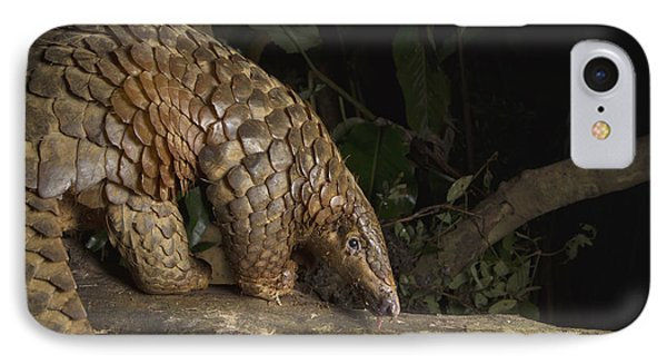 Malayan Pangolin Eating Ants Vietnam IPhone Case by Suzi Eszterhas