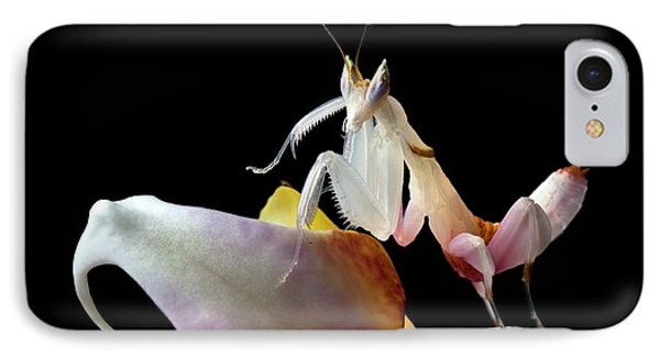 Malaysian Orchid Mantis IPhone Case by Alex Hyde