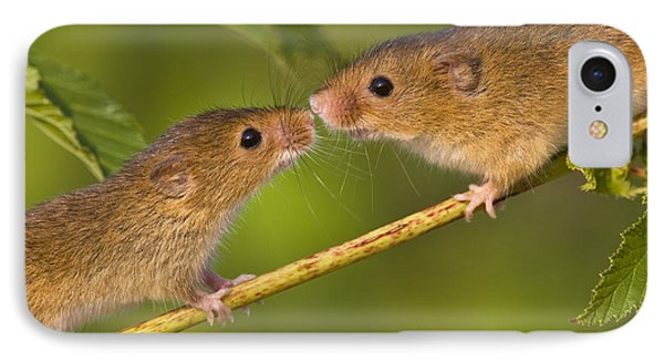 Male And Female Harvest Mice Phone Case by Jean-Louis Klein and Marie-Luce Hubert