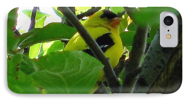 Male American Goldfinch Phone Case by J McCombie