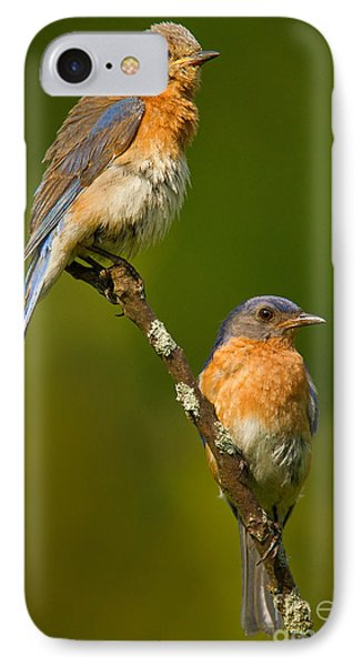 IPhone Case featuring the photograph Male And Female Bluebirds by Jerry Fornarotto