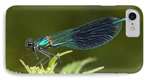 Male Banded Demoiselle Damselfly IPhone Case by Bob Gibbons