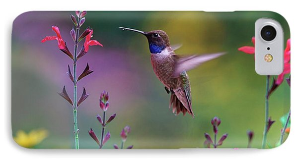 Male Black-chinned Hummingbird IPhone 7 Case