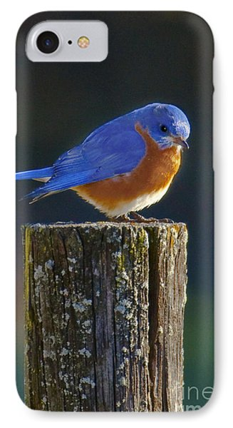 Male Bluebird IPhone Case by Ronald Lutz